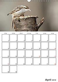 Vögel im heimischen Garten (Wandkalender 2019 DIN A3 hoch) - Produktdetailbild 4