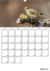 Vögel im heimischen Garten (Wandkalender 2019 DIN A3 hoch) - Produktdetailbild 7