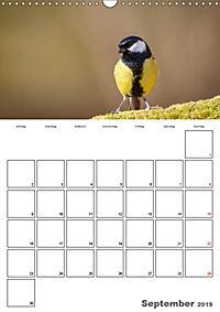 Vögel im heimischen Garten (Wandkalender 2019 DIN A3 hoch) - Produktdetailbild 9