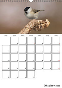 Vögel im heimischen Garten (Wandkalender 2019 DIN A3 hoch) - Produktdetailbild 10