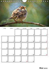 Vögel im heimischen Garten (Wandkalender 2019 DIN A4 hoch) - Produktdetailbild 5