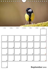 Vögel im heimischen Garten (Wandkalender 2019 DIN A4 hoch) - Produktdetailbild 9