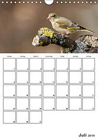 Vögel im heimischen Garten (Wandkalender 2019 DIN A4 hoch) - Produktdetailbild 7
