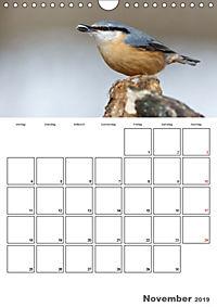 Vögel im heimischen Garten (Wandkalender 2019 DIN A4 hoch) - Produktdetailbild 11
