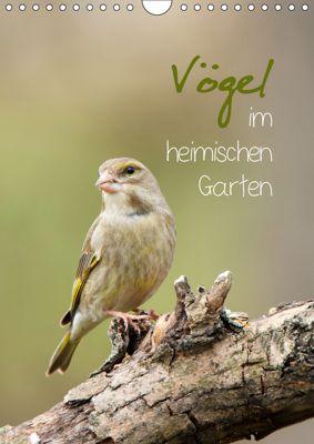 Vögel im heimischen Garten (Wandkalender 2019 DIN A4 hoch), Heidi Spiegler