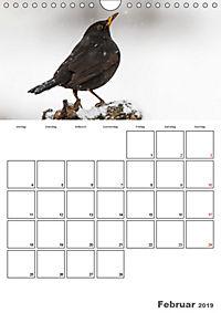 Vögel im heimischen Garten (Wandkalender 2019 DIN A4 hoch) - Produktdetailbild 2