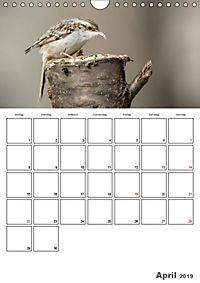 Vögel im heimischen Garten (Wandkalender 2019 DIN A4 hoch) - Produktdetailbild 4