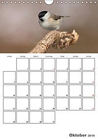 Vögel im heimischen Garten (Wandkalender 2019 DIN A4 hoch) - Produktdetailbild 10