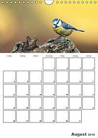 Vögel im heimischen Garten (Wandkalender 2019 DIN A4 hoch) - Produktdetailbild 8