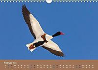 Vogelflug-Faszination (Wandkalender 2019 DIN A4 quer) - Produktdetailbild 2