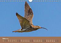 Vogelflug-Faszination (Wandkalender 2019 DIN A4 quer) - Produktdetailbild 3