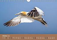 Vogelflug-Faszination (Wandkalender 2019 DIN A4 quer) - Produktdetailbild 10