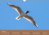 Vogelflug-Faszination (Wandkalender 2019 DIN A4 quer) - Produktdetailbild 7
