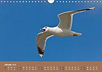 Vogelflug-Faszination (Wandkalender 2019 DIN A4 quer) - Produktdetailbild 1