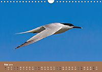 Vogelflug-Faszination (Wandkalender 2019 DIN A4 quer) - Produktdetailbild 5