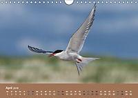 Vogelflug-Faszination (Wandkalender 2019 DIN A4 quer) - Produktdetailbild 4