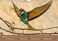 Vogelflug-Faszination (Wandkalender 2019 DIN A4 quer) - Produktdetailbild 6