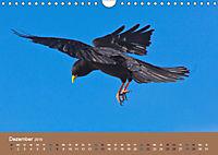 Vogelflug-Faszination (Wandkalender 2019 DIN A4 quer) - Produktdetailbild 12
