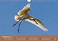 Vogelflug-Faszination (Wandkalender 2019 DIN A4 quer) - Produktdetailbild 9
