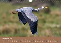 Vogelflug-Faszination (Wandkalender 2019 DIN A4 quer) - Produktdetailbild 11