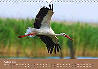 Vogelflug-Faszination (Wandkalender 2019 DIN A4 quer) - Produktdetailbild 8