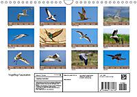 Vogelflug-Faszination (Wandkalender 2019 DIN A4 quer) - Produktdetailbild 13