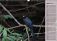 Vogelparadies Costa Rica (Wandkalender 2019 DIN A3 quer) - Produktdetailbild 1
