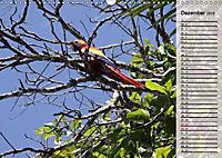 Vogelparadies Costa Rica (Wandkalender 2019 DIN A3 quer) - Produktdetailbild 12