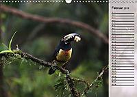 Vogelparadies Costa Rica (Wandkalender 2019 DIN A3 quer) - Produktdetailbild 2