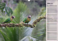 Vogelparadies Costa Rica (Wandkalender 2019 DIN A3 quer) - Produktdetailbild 3