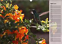 Vogelparadies Costa Rica (Wandkalender 2019 DIN A3 quer) - Produktdetailbild 4