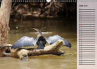 Vogelparadies Costa Rica (Wandkalender 2019 DIN A3 quer) - Produktdetailbild 6