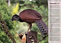 Vogelparadies Costa Rica (Wandkalender 2019 DIN A3 quer) - Produktdetailbild 9