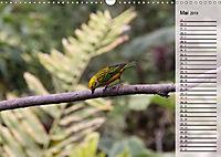 Vogelparadies Costa Rica (Wandkalender 2019 DIN A3 quer) - Produktdetailbild 5