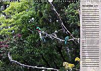 Vogelparadies Costa Rica (Wandkalender 2019 DIN A3 quer) - Produktdetailbild 11