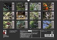 Vogelparadies Costa Rica (Wandkalender 2019 DIN A3 quer) - Produktdetailbild 13