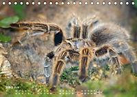 Vogelspinnen (Theraphosidae)CH-Version (Tischkalender 2019 DIN A5 quer) - Produktdetailbild 3