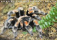 Vogelspinnen (Theraphosidae)CH-Version (Tischkalender 2019 DIN A5 quer) - Produktdetailbild 5