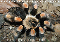 Vogelspinnen (Theraphosidae)CH-Version (Tischkalender 2019 DIN A5 quer) - Produktdetailbild 2