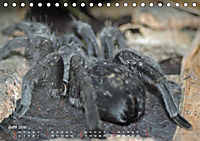 Vogelspinnen (Theraphosidae)CH-Version (Tischkalender 2019 DIN A5 quer) - Produktdetailbild 6