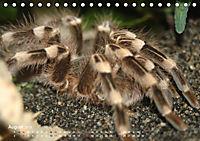 Vogelspinnen (Theraphosidae)CH-Version (Tischkalender 2019 DIN A5 quer) - Produktdetailbild 8
