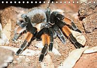 Vogelspinnen (Theraphosidae)CH-Version (Tischkalender 2019 DIN A5 quer) - Produktdetailbild 10