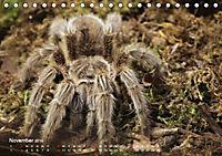 Vogelspinnen (Theraphosidae)CH-Version (Tischkalender 2019 DIN A5 quer) - Produktdetailbild 11