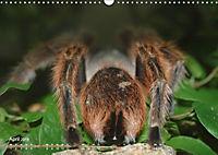 Vogelspinnen (Theraphosidae)CH-Version (Wandkalender 2019 DIN A3 quer) - Produktdetailbild 4