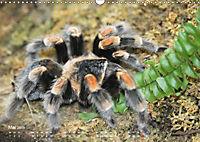 Vogelspinnen (Theraphosidae)CH-Version (Wandkalender 2019 DIN A3 quer) - Produktdetailbild 5