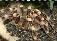 Vogelspinnen (Theraphosidae)CH-Version (Wandkalender 2019 DIN A3 quer) - Produktdetailbild 8