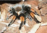 Vogelspinnen (Theraphosidae)CH-Version (Wandkalender 2019 DIN A3 quer) - Produktdetailbild 10