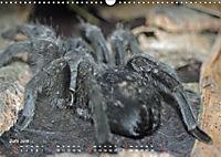 Vogelspinnen (Theraphosidae)CH-Version (Wandkalender 2019 DIN A3 quer) - Produktdetailbild 6