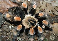 Vogelspinnen (Theraphosidae)CH-Version (Wandkalender 2019 DIN A3 quer) - Produktdetailbild 2