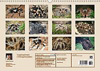 Vogelspinnen (Theraphosidae)CH-Version (Wandkalender 2019 DIN A3 quer) - Produktdetailbild 13
